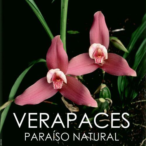 Verapaces